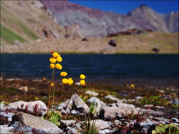 Flora al borde de la laguna